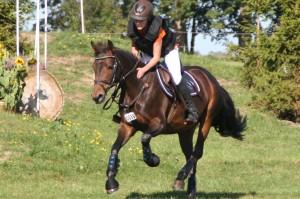 Braves Pferd